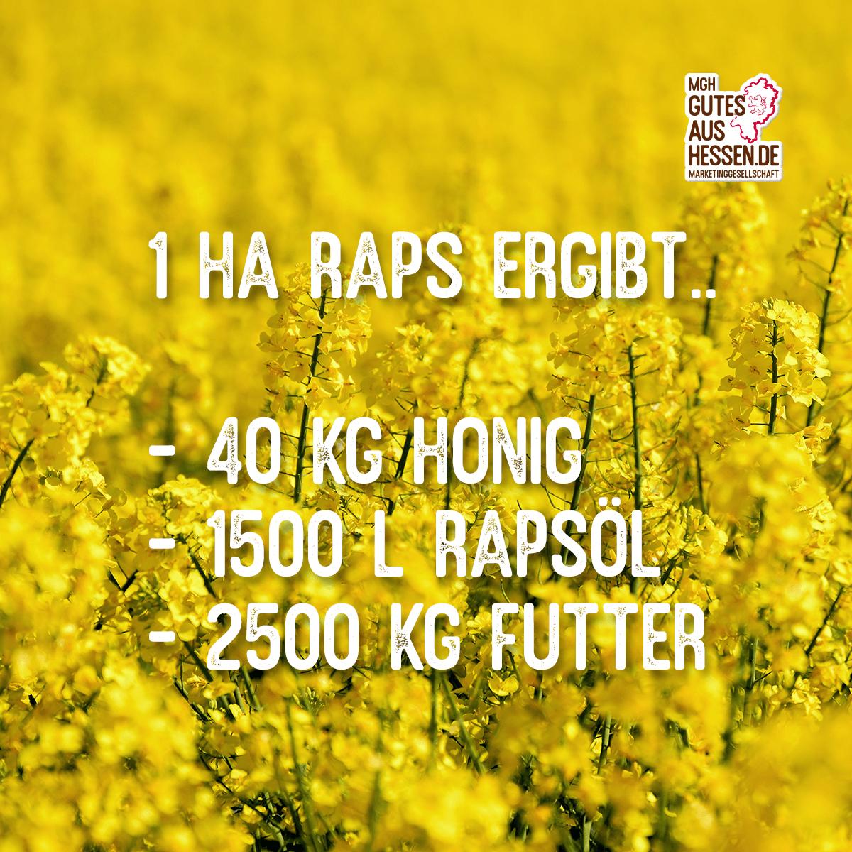 Instagram Post der MGH Gutes aus Hessen zum Thema Raps aus dem Mai 2020