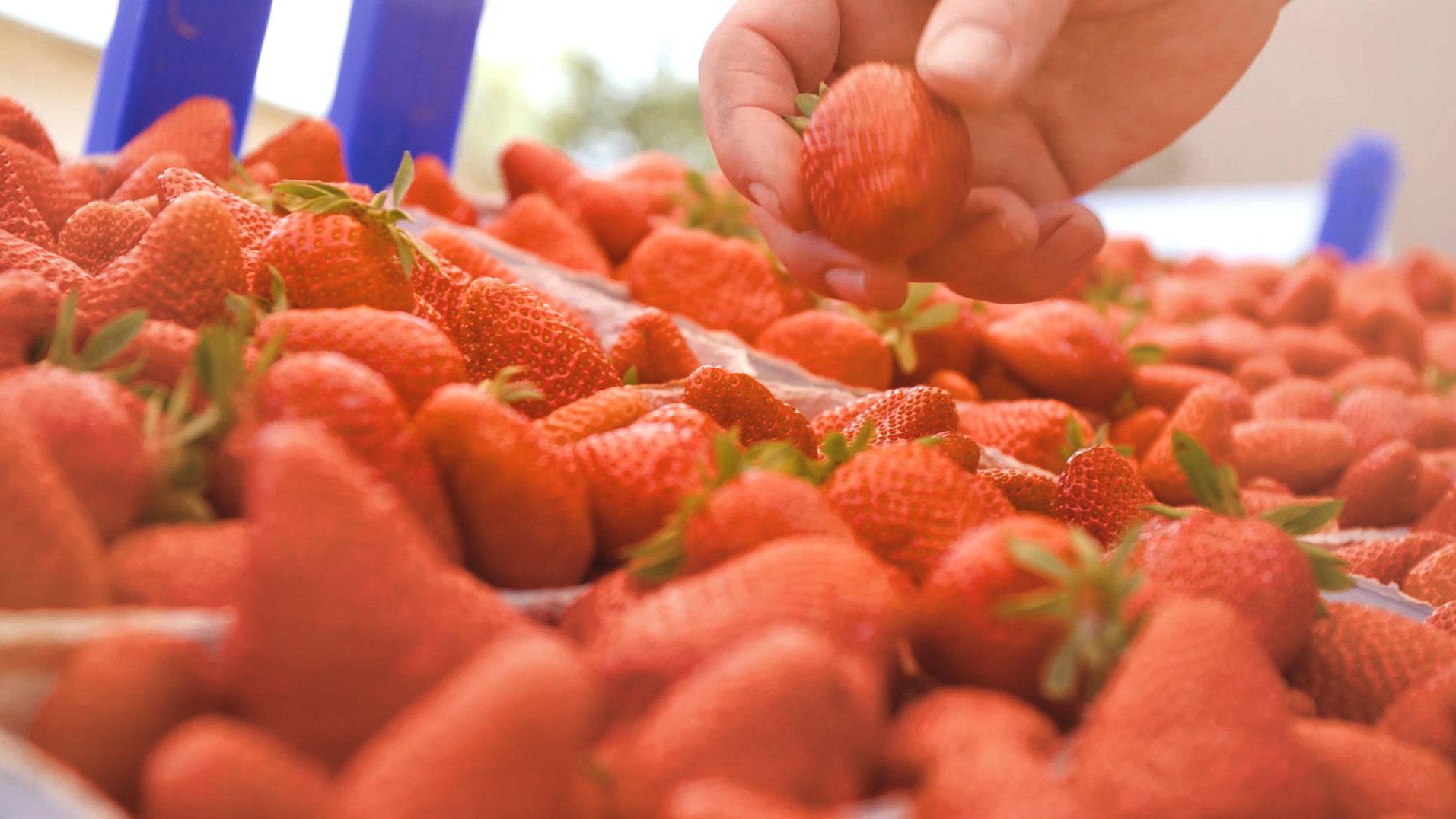 Hand, die nach Erdbeeren greift